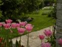 Fernery in front garden