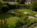 Early season flowering – Irises and Anthemis