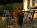 Evening sun on the terrace
