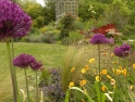Alliums, Geums, Ajuga and Feather grass