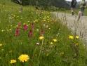 Alpine roadside verge